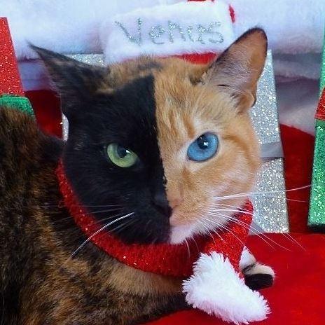 Chú mèo hai mặt độc đáo thu hút hàng triệu fan trên Facebook - ảnh 1