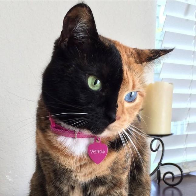 Chú mèo hai mặt độc đáo thu hút hàng triệu fan trên Facebook - ảnh 10