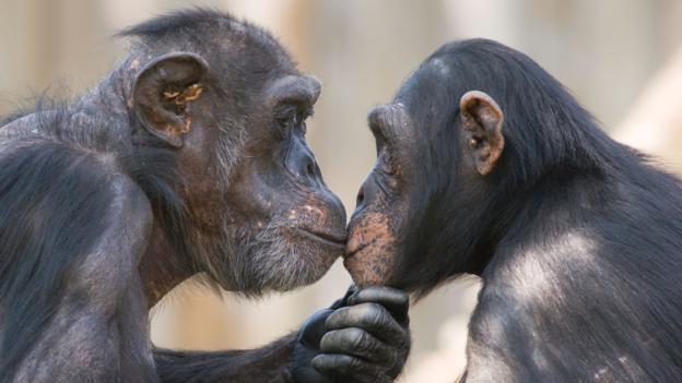Vì sao con người lại hôn nhau mà các loài vật khác thì không ? - ảnh 2