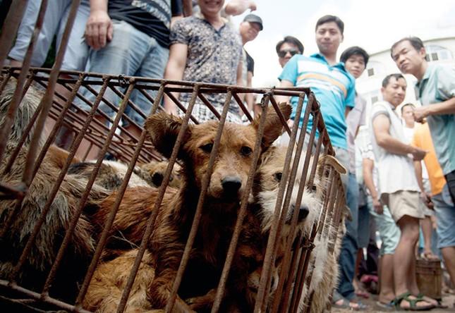 Rợn người phát hiện hơn 600 tấm da chó phơi dưới chân cầu - ảnh 5