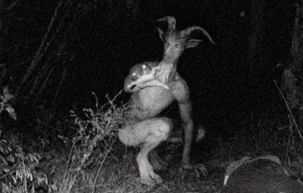 7 loài sinh vật bí ẩn và đáng sợ nhất hành tinh - ảnh 9