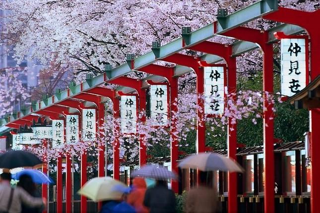 Những sự thật thú vị về Nhật Bản khiến bạn ngạc nhiên (1) - ảnh 1
