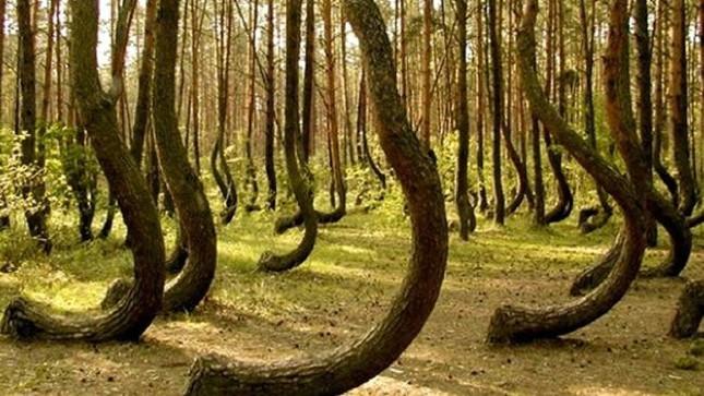 Cánh rừng ma quái 'ăn thịt người' kỳ bí nhất thế giới - ảnh 2