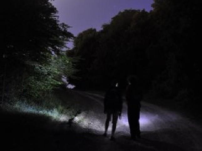Cánh rừng ma quái 'ăn thịt người' kỳ bí nhất thế giới - ảnh 1