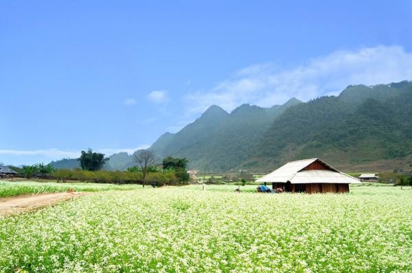Địa điểm ngắm hoa cải đầu đông tuyệt nhất ở Mộc Châu - ảnh 1