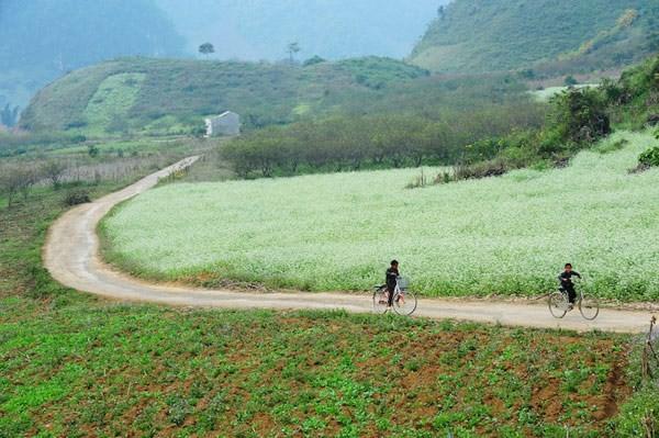 Địa điểm ngắm hoa cải đầu đông tuyệt nhất ở Mộc Châu - ảnh 3