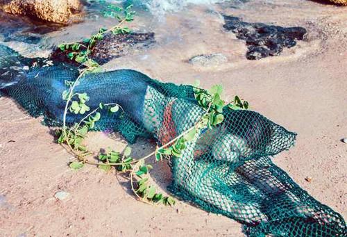 Thực hư thông tin bắt được nàng tiên cá ở Quảng Nam - ảnh 2