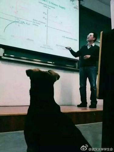 Kỳ lạ chó đi học đại học ở Trung Quốc - ảnh 1