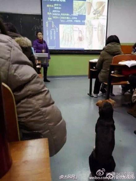 Kỳ lạ chó đi học đại học ở Trung Quốc - ảnh 5