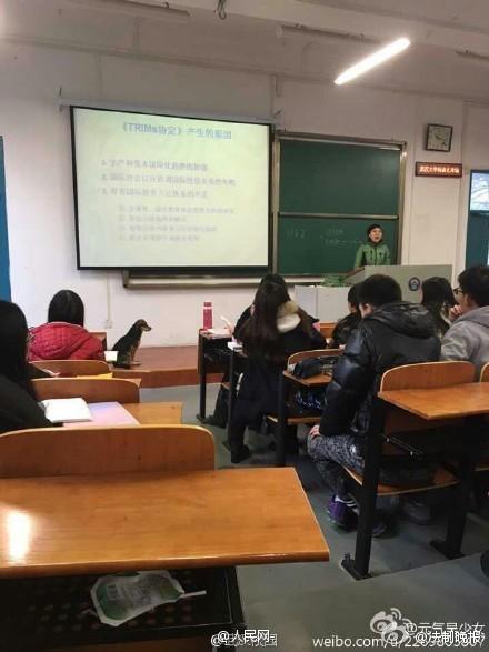 Kỳ lạ chó đi học đại học ở Trung Quốc - ảnh 3