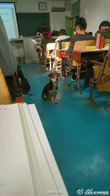 Kỳ lạ chó đi học đại học ở Trung Quốc - ảnh 9