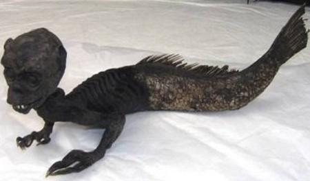 Bí ẩn về sự tồn tại của Nàng tiên cá trong lòng đại dương - ảnh 3