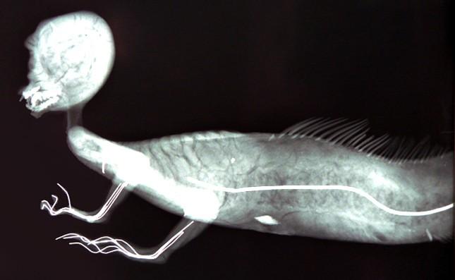 Bí ẩn về sự tồn tại của Nàng tiên cá trong lòng đại dương - ảnh 5