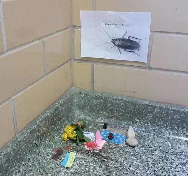 Nhóm sinh viên Mỹ tổ chức đám tang cho một con… gián - ảnh 2