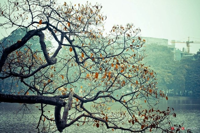 Dự báo thời tiết ngày 22/12: Miền Bắc chấm dứt rét đậm - ảnh 1