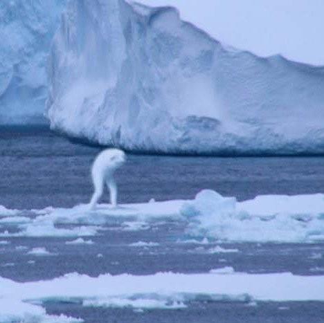 Quái vật giống người ở Nam Cực gây xôn xao cộng đồng mạng - ảnh 1