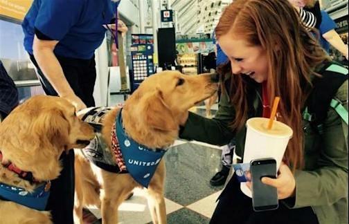 Đưa chó tới sân bay giúp hành khách xả stress - ảnh 1