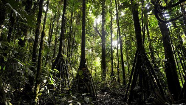 Bí ẩn loài cây có thể di chuyển 20 m mỗi năm ở Ecuador - ảnh 1