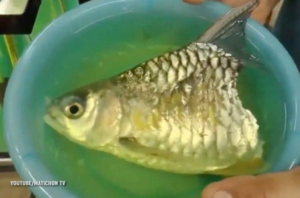 Kỳ lạ con cá bị mất một nửa thân dưới vẫn sống được hơn 6 tháng - ảnh 1