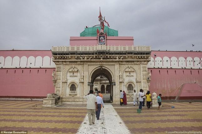 Kỳ lạ ngôi đền nuôi tới 20 nghìn con chuột ở Ấn Độ - ảnh 1