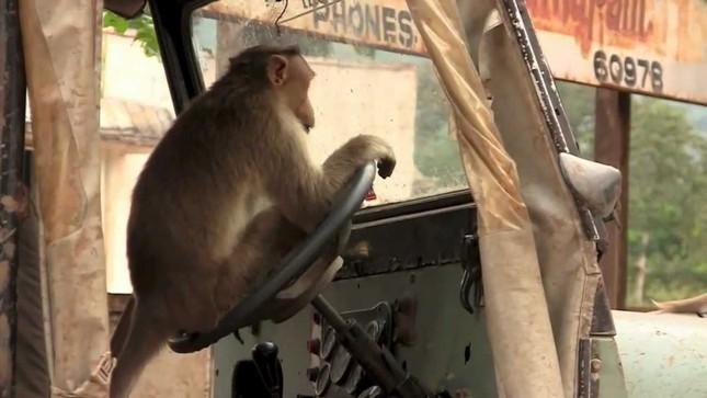 Thừa lúc tài xế ngủ, khỉ lẻn vào lái xe buýt gây tai nạn liên hoàn - ảnh 1