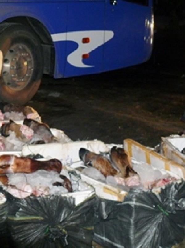 Gần 700kg chân trâu bò hôi thối bị bắt khi đang trên đường tiêu thụ - ảnh 1