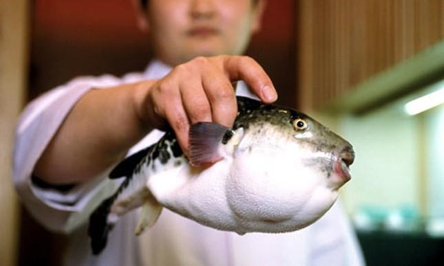 Đặc sản ẩm thực Nhật chứa độc tố có thể giết chết 30 người - ảnh 1