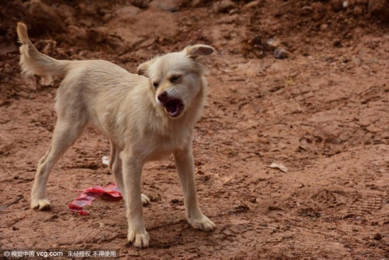 Cảm động chú chó tuyệt thực, tìm chủ dưới đống đổ nát - ảnh 3