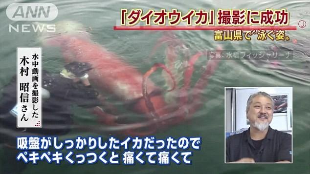Mực khổng lồ quý hiếm bất ngờ xuất hiện ở cảng biển Nhật Bản - ảnh 2