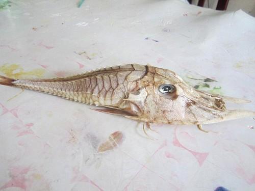 Bắt được cá kì lạ có răng nanh dài như kiếm ngoài khơi Malaysia - ảnh 1