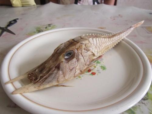 Bắt được cá kì lạ có răng nanh dài như kiếm ngoài khơi Malaysia - ảnh 2