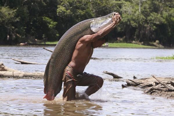 Khám phá 'quái vật nước ngọt lớn nhất hành tinh' ở Amazon - ảnh 1
