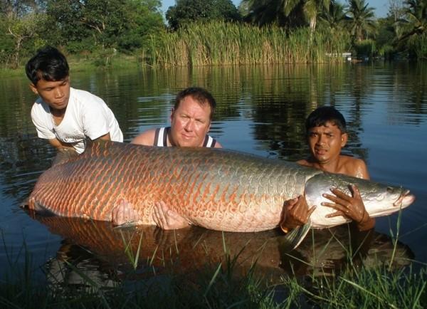 Khám phá 'quái vật nước ngọt lớn nhất hành tinh' ở Amazon - ảnh 4