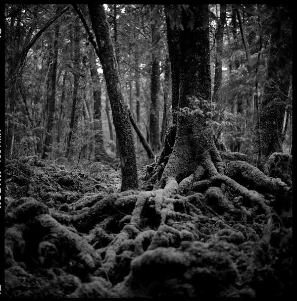 Lạnh gáy khu rừng hàng ngàn người 'đua' nhau vào tự sát - ảnh 9