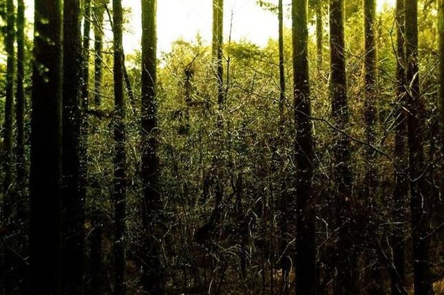 Lạnh gáy khu rừng hàng ngàn người 'đua' nhau vào tự sát - ảnh 2