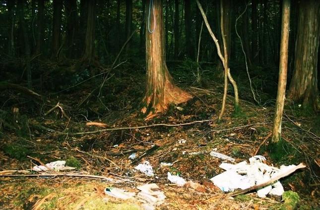 Lạnh gáy khu rừng hàng ngàn người 'đua' nhau vào tự sát - ảnh 3