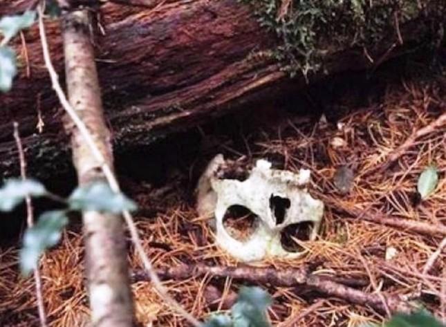 Lạnh gáy khu rừng hàng ngàn người 'đua' nhau vào tự sát - ảnh 4