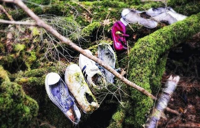 Lạnh gáy khu rừng hàng ngàn người 'đua' nhau vào tự sát - ảnh 6
