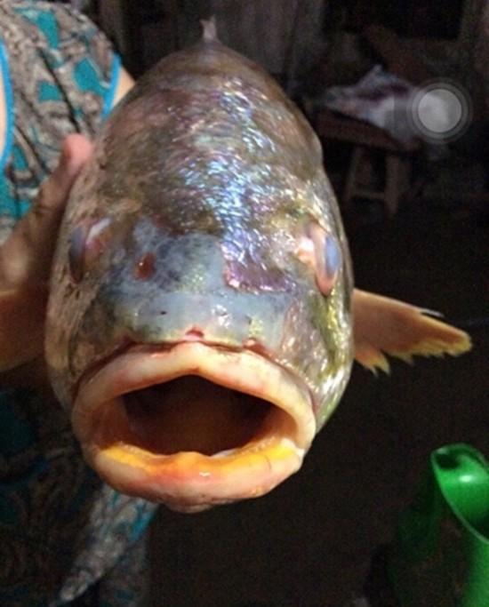 Ngư dân bắt được cá sủ vàng tiền tỷ trên sông Đồng Nai - ảnh 1