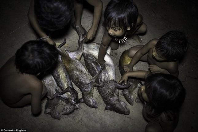 Bộ tộc kỳ lạ ở Amazon nuôi động vật hoang dã, cho bú sữa như con - ảnh 2