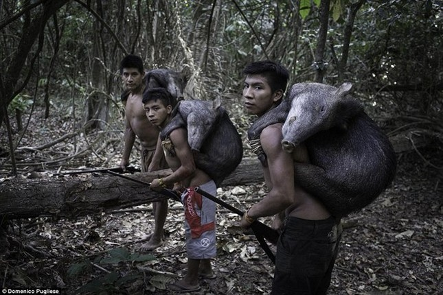 Bộ tộc kỳ lạ ở Amazon nuôi động vật hoang dã, cho bú sữa như con - ảnh 4