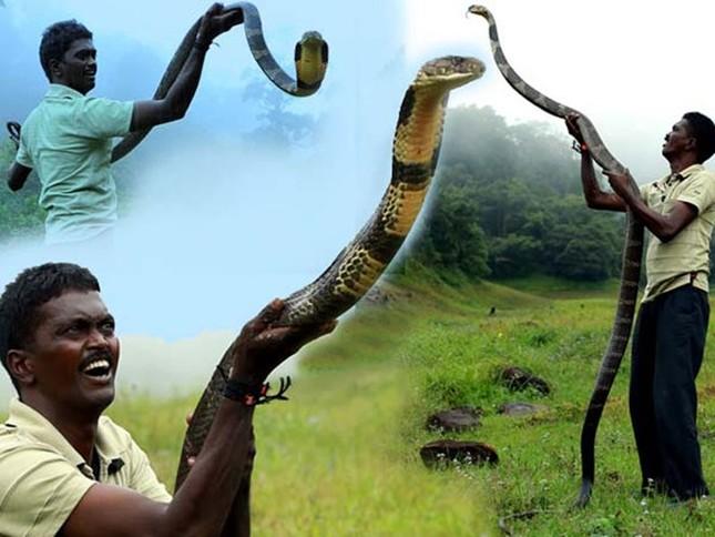 Hãi hùng người đàn ông 3000 lần bị rắn độc cắn không chết - ảnh 1