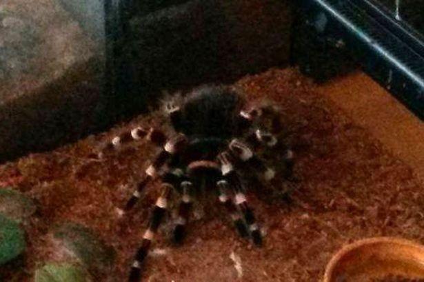 Lính cứu hỏa giải cứu thành công… 60 con nhện khỏi hỏa hoạn - ảnh 1