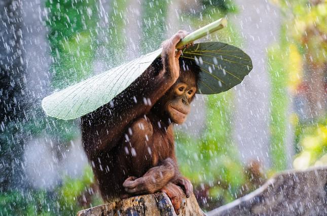 13 bức ảnh thiên nhiên ấn tượng nhất năm 2015 - ảnh 9