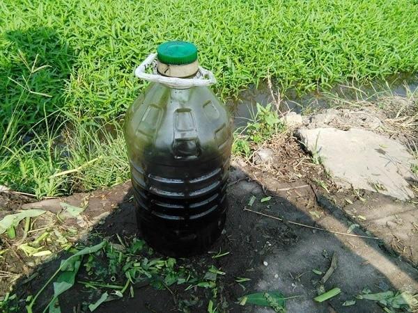 Bắt quả tang một phụ nữ dùng nhớt thải tưới rau muống ở Sài Gòn - ảnh 1