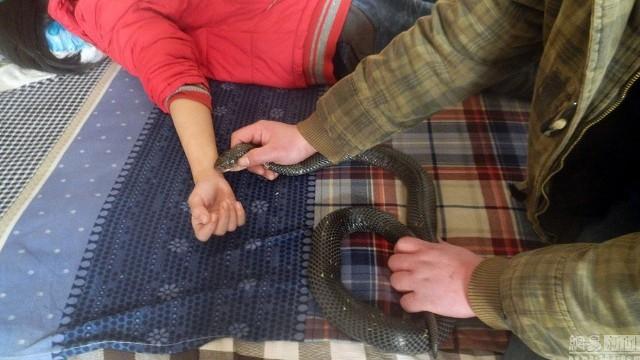 Hãi hùng cha cho rắn hổ mang cực độc cắn tay con gái để chữa bệnh - ảnh 2