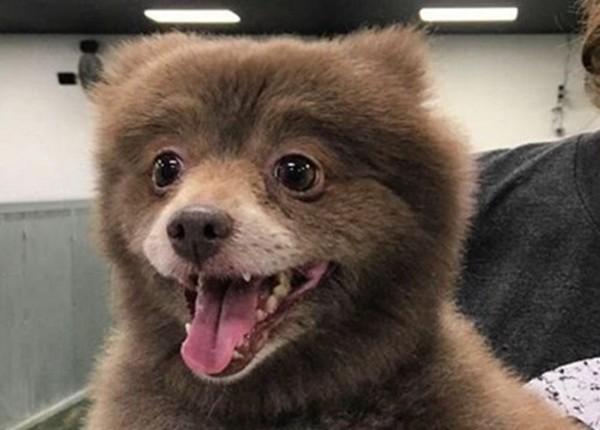 Xôn xao trước hình ảnh loài 'gấu chó' trong 'truyền thuyết' - ảnh 2