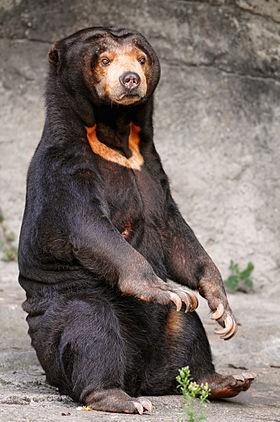 Xôn xao trước hình ảnh loài 'gấu chó' trong 'truyền thuyết' - ảnh 1