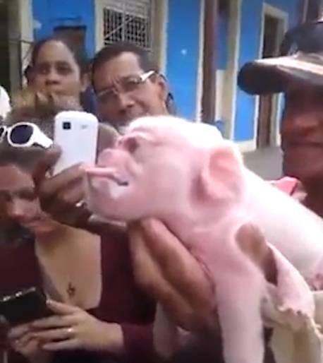 Kỳ lạ sinh vật mình lợn, mặt khỉ chào đời ở Cuba - ảnh 2