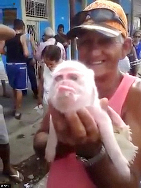 Ngạc nhiên với lợn mặt khỉ độc nhất vô nhị - ảnh 1